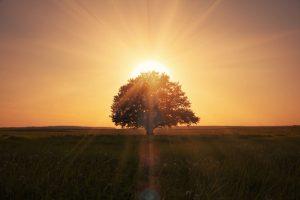 meditazione e cervello albero