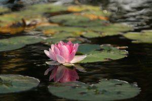 aumentare la consapevolezza di se stessi fiore