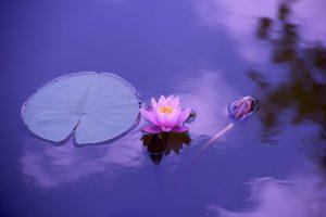 cos'è la spiritualità fiore
